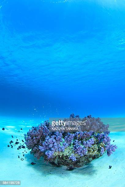 Soft Coral in Blossom