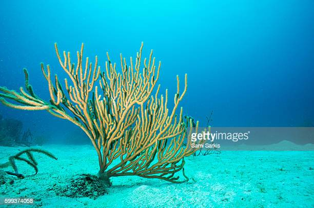 soft coral underwater, bayahibe, dominican republic, caribbean - at the bottom of stock pictures, royalty-free photos & images