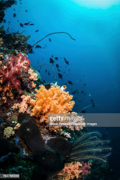Soft corals and fish on a coral reef.
