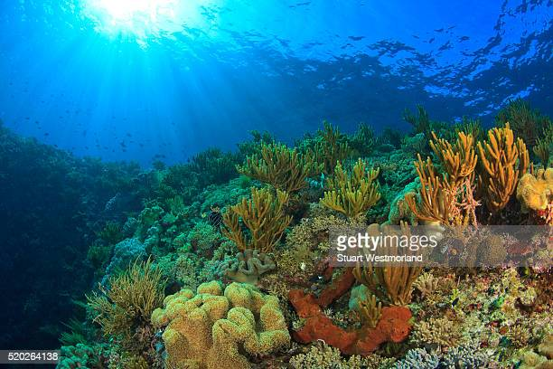 soft corals and sponges near wetar island in the banda sea, indonesia - coral stock pictures, royalty-free photos & images