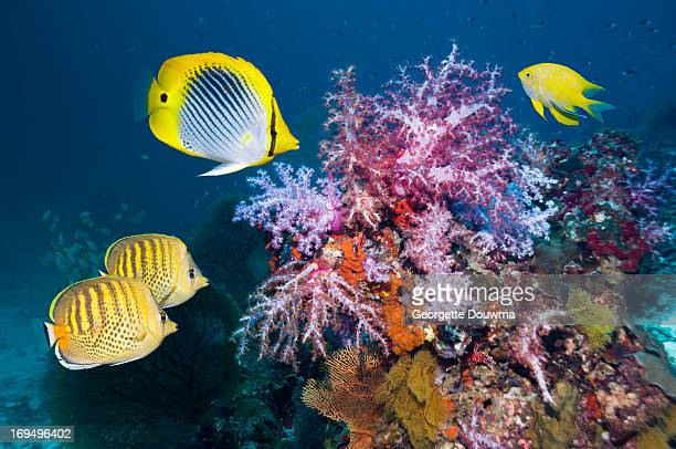 Soft corals and tropical fish