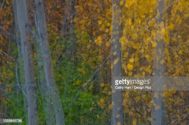 soft fall foliage colors in denali national park & preserve, interior alaska, fall - impressionism stock photos and pictures