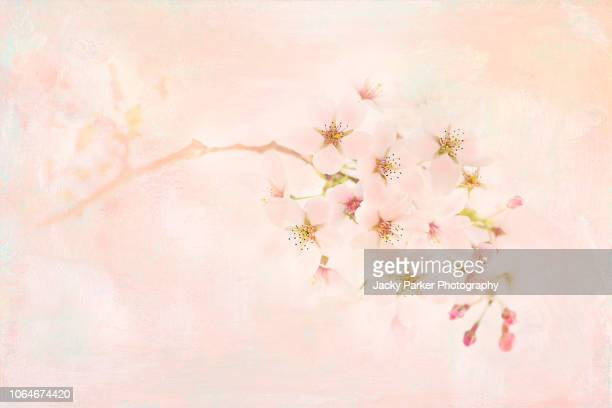 A soft feminine image of delicate spring, pink cherry blossom flowers with a soft pastel background