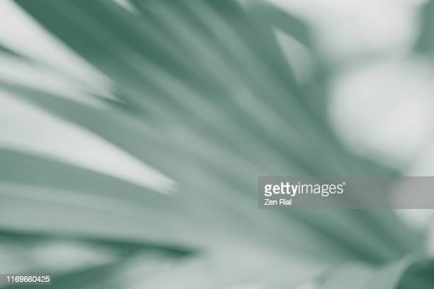 soft focus and color manipulated image of a palm leaf - soft focus foto e immagini stock