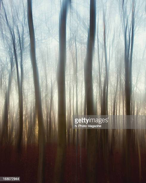 Soft focus view through the trees of a bare winter forest, taken on November 27, 2011.