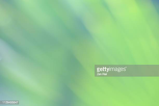 soft focused image of a palm leaf showing hints of it's fanned out pattern - chlorophyll stock pictures, royalty-free photos & images