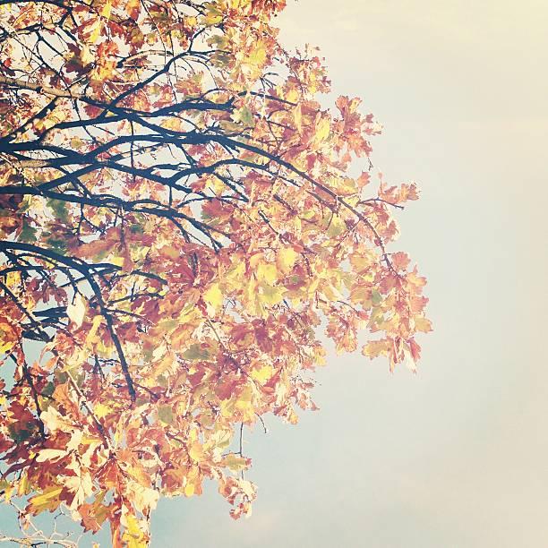 Soft light shining on golden autumn leaves