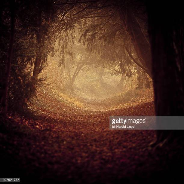 A softly lit path through shadowed woods