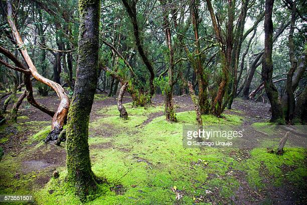 Soil and laurel trees covered in moss