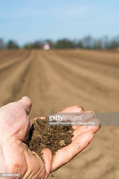 soil held in farmers hand, showing the fine loam created in the seed bed, ideal for growing potatoes - loam stock photos and pictures
