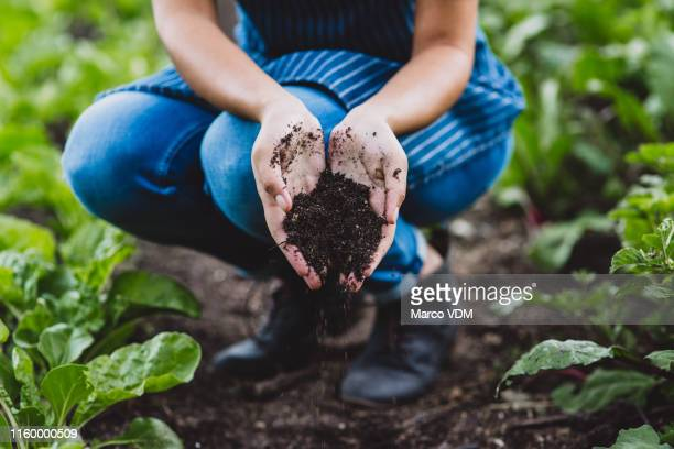soils provide plants with essential minerals and nutrients - green fingers stock pictures, royalty-free photos & images