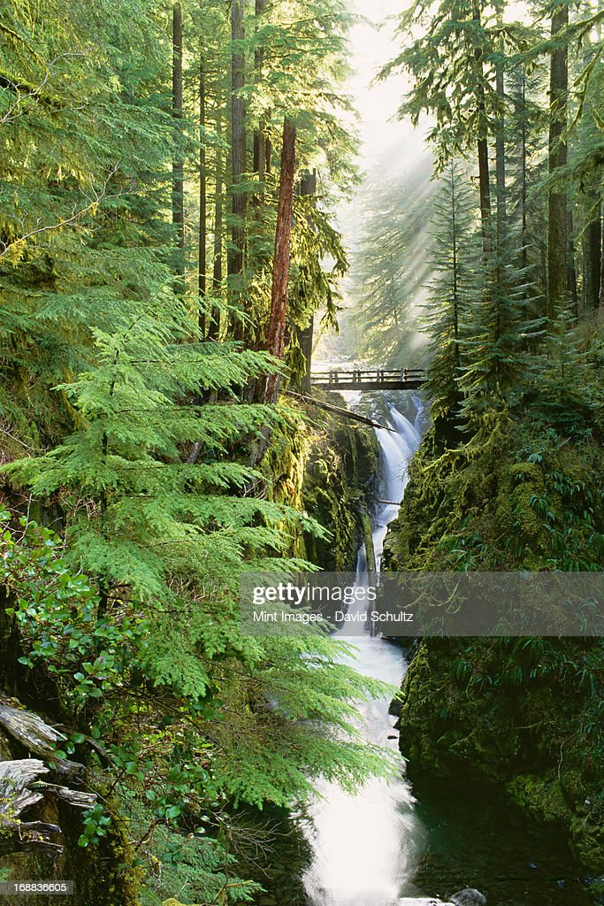 Sol Duc Falls are in the forest of Olympic National Park, Washington State. : Stock Photo