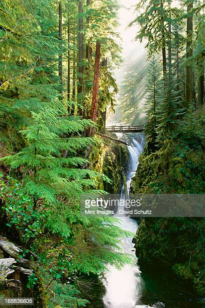 sol duc falls are in the forest of olympic national park, washington state. - olympic park stock pictures, royalty-free photos & images