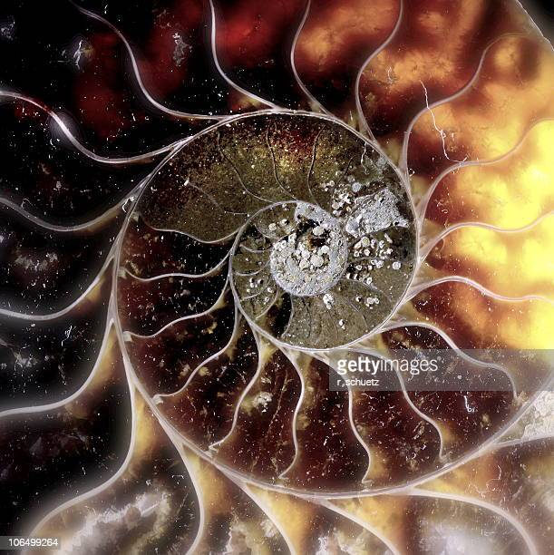 Solar III (ammonite version)