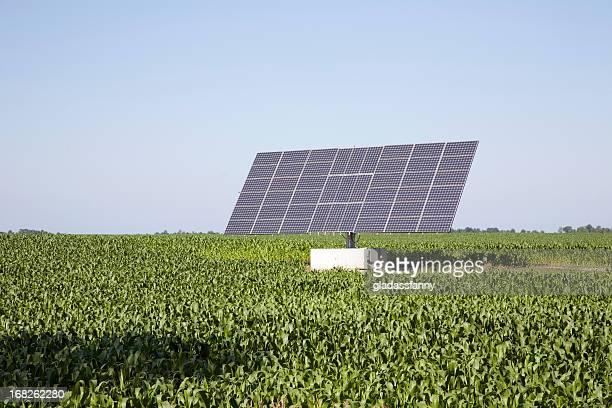 Solar Panel in Cornfield