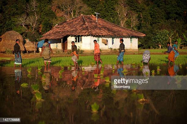A solar panel stands on the roof of a house as women work on a rice paddy in Halliberu village Karnataka India on Wednesday Jan 11 2012 Across India...