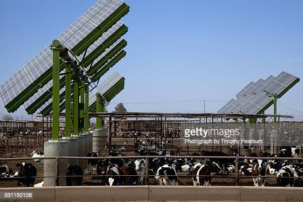 solar panels and dairy cows - timothy hearsum stock-fotos und bilder