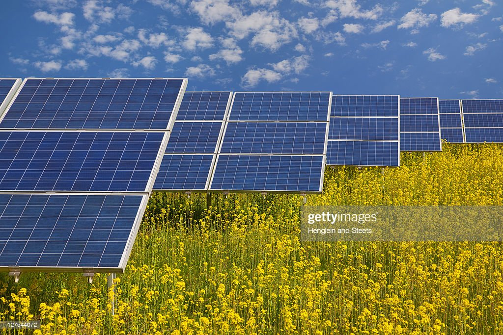 Solar panels in rapeseed field : Stock Photo