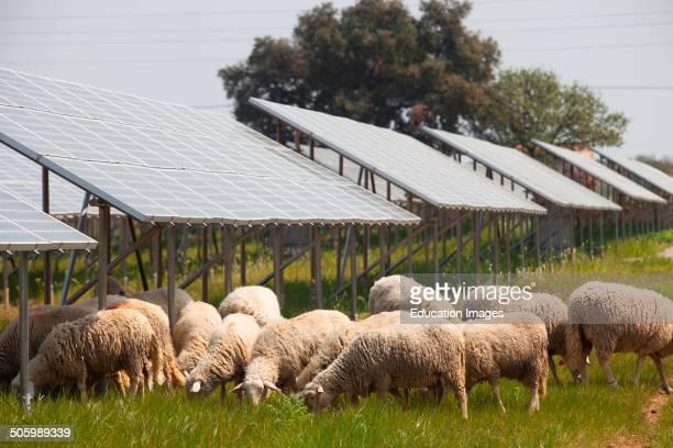 Solar Panels Solar Power Plant Area of Vulci Province of Viterbo Lazio Italy Europe