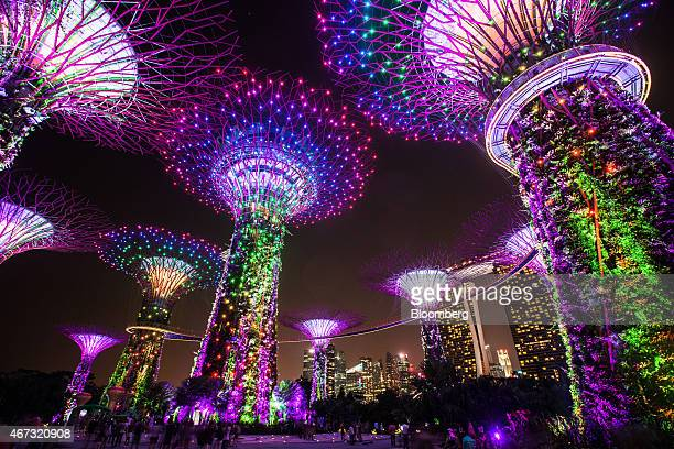 Solarpowered 'Supertrees' at Gardens by the Bay stand illuminated at night in front of the Marina Bay Sands hotel and casino background right in...