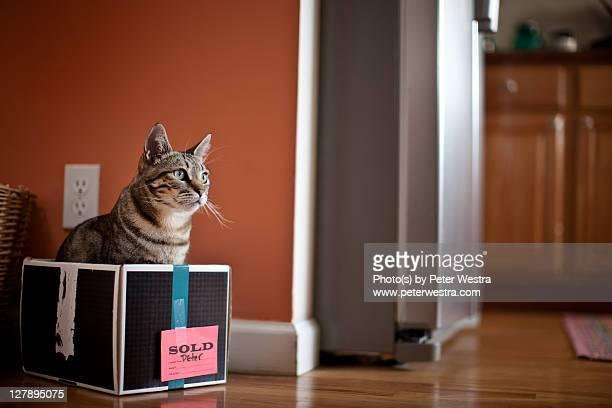 Sold - cat in box