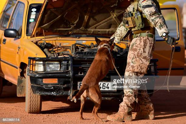 A soldier and a dog of the Bundeswehr the German armed forces search for hidden explosives at car and trucks outside Camp Castor during sunrise on...