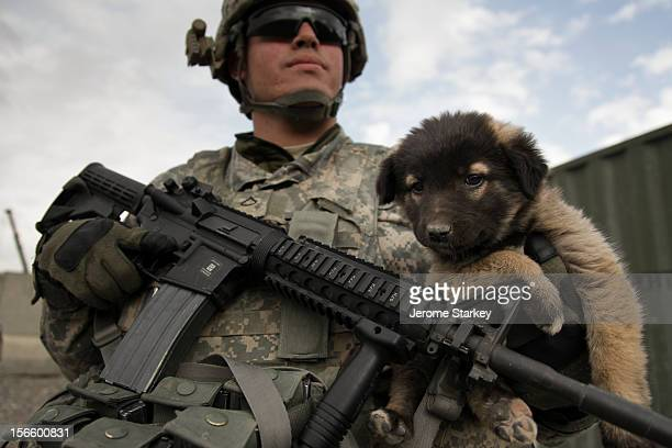 Soldier from the 2-502 Infantry Battalion, 101st Airborne Division, with a stray puppy at the entrance to Forward Operating Base Howz-e-Madad, in...