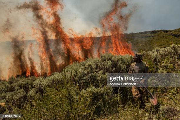 A soldier from the Kenya Army fights a fire on March 01 2019 in Mount Kenya National Park Kenya An estimated 35000 acres of land has been burned by...