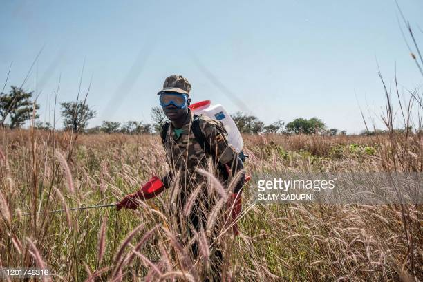 A soldier of the Uganda Peoples Defence Forces spray plants where the locust swarms will land with insecticides with the hopes of killing the locusts...