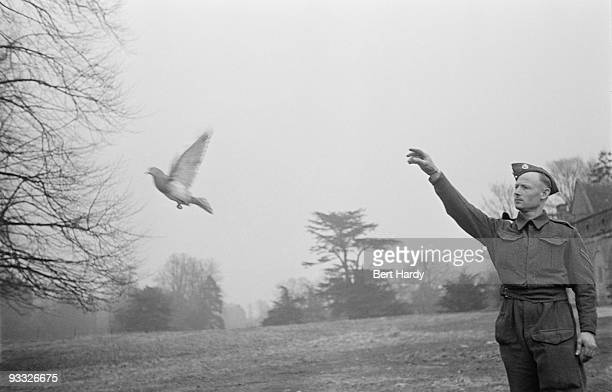 A soldier releases a carrier pigeon 1942 Original publication Picture Post 1199 Pigeon Service unpub