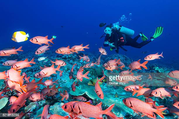 Soldierfish and diver - Palau
