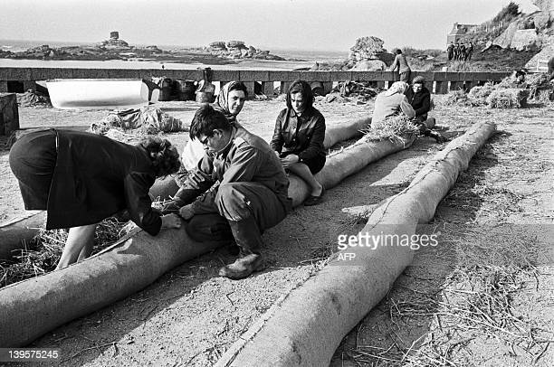 Soldiers and volunteers women prepare floating booms with straw to prevent oil slick on April 19 1967 on the beach of PerrosGuirec as the Torrey...