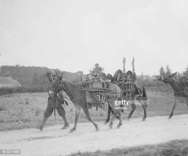 Soldiers from the 3rd Lahore Indian Division seen here with mules loaded with bails of hay making their way up to the front Circa October 1914