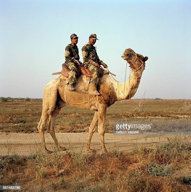 Soldiers from the Indian army ride a camel towards the border of India and Pakistan on the Great Rann Of Kutch This is a flat salt pan which becomes...