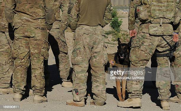 Soldiers of the 10th Mountain Division US Army 2nd Battalion 22nd Infantry Regiment stand near a sniffer dog at Afghan National Army Forward...