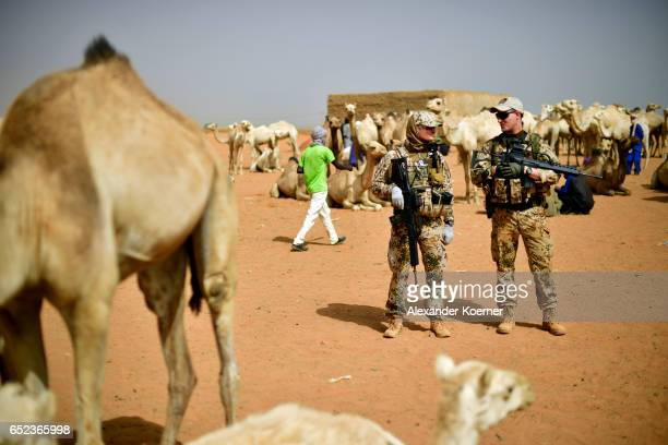 Soldiers of the Bundeswehr the German Armed Forces stand by camels which are for sale during a weekly cattle market on the outskirts of Gao on March...