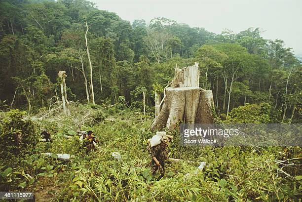 Soldiers of the Sandinista Popular Army in the Bosawas tropical forest Nicaragua 1987 One of the effects of the Contra War has been deforestation in...