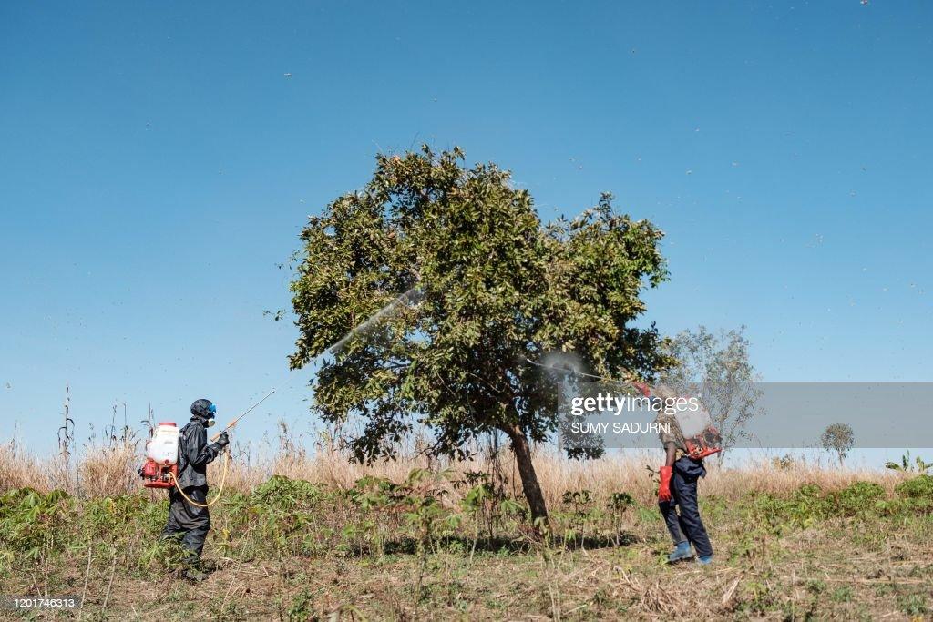 UGANDA-ENVIRONMENT-LOCUSTS-FOOD : News Photo