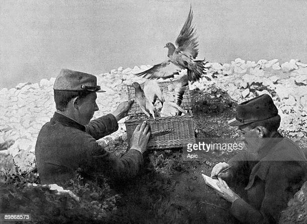 2 soldiers releasing carrier pigeons on front ww1