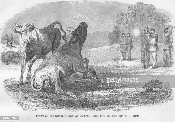 Soldiers shoot Cattle for Food early to mid 1860s From an issue of Frank Leslie's Illustrated Almanac