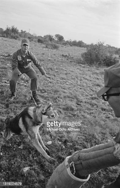 Soldiers training a German shepherd, with one soldier wearing a bite protection sleeve, as the dog to undergoes sentry training for use in the...