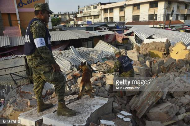 Soldiers with specially trained dogs search for survivors amid the ruins of buildings knocked down Thursday night by a 81magnitude quake in Juchitan...