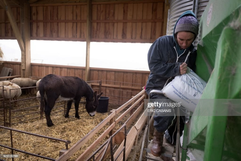 Solenn Guillaume, a young livestock farmer who moved to Fanjeaux (Aude) in the 'natural region' of Piege five years ago with her companion, prepares chicken feed on their farm in Fanjeaux on February 20, 2018. The region is considered a 'disadvantaged area', giving it entitlement to substantial aid through the government's 'Compensatory Allowance for Natural Handicap' program (Indemnite compensatoire de handicaps naturels, ICHN). The map of disadvantaged areas is currently being revised and Fanjeaux may be part of the 1,4000 communes removed from the list of disadvantaged areas. /