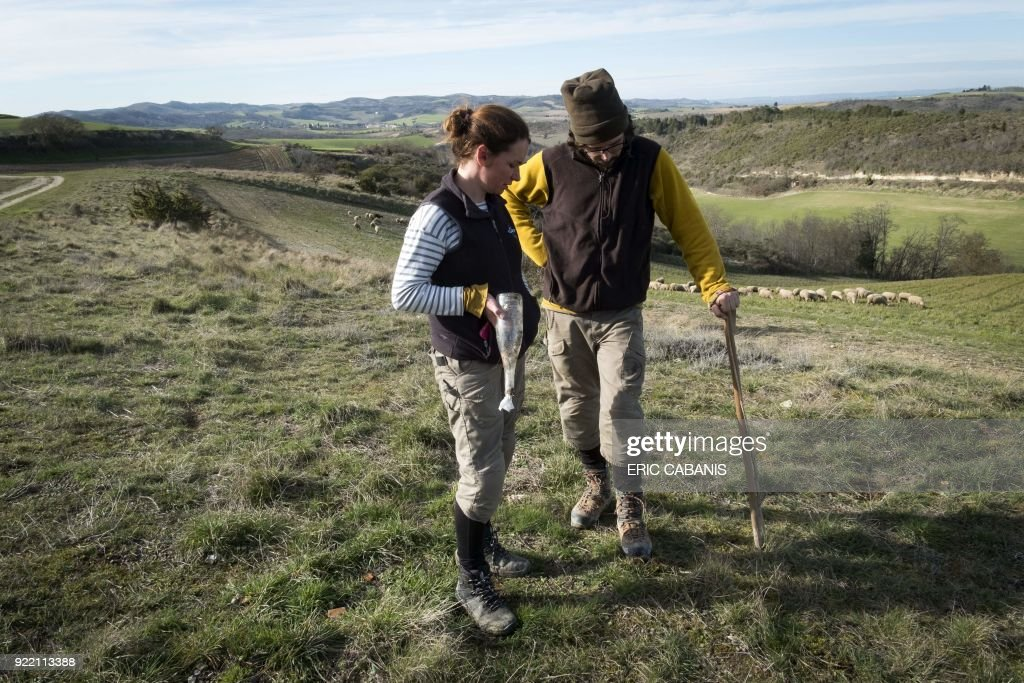 Solenn Guillaume and Yann Vetois, a couple of young livestock farmers who moved to Fanjeaux (Aude) in the 'natural region' of Piege five years ago, pose at their farm on February 16, 2018. The region is considered a 'disadvantaged area', giving it entitlement to substantial aid through the government's 'Compensatory Allowance for Natural Handicap' program (Indemnite compensatoire de handicaps naturels, ICHN). The map of disadvantaged areas is currently being revised and Fanjeaux may be part of the 1,4000 communes removed from the list of disadvantaged areas. /