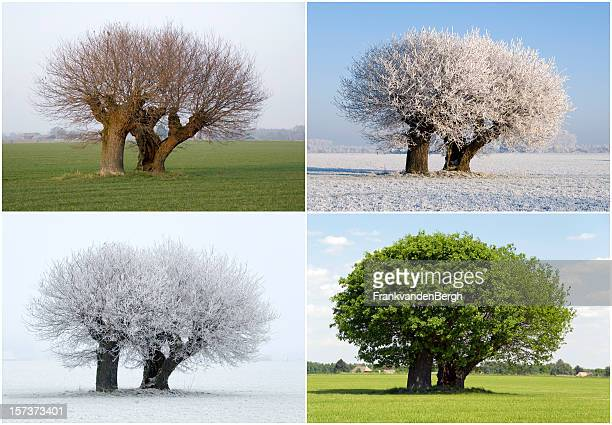 solitaire tree in four different seasons - four seasons stock pictures, royalty-free photos & images
