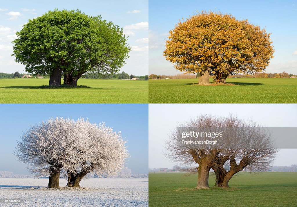 four seasons stock photos and pictures getty images