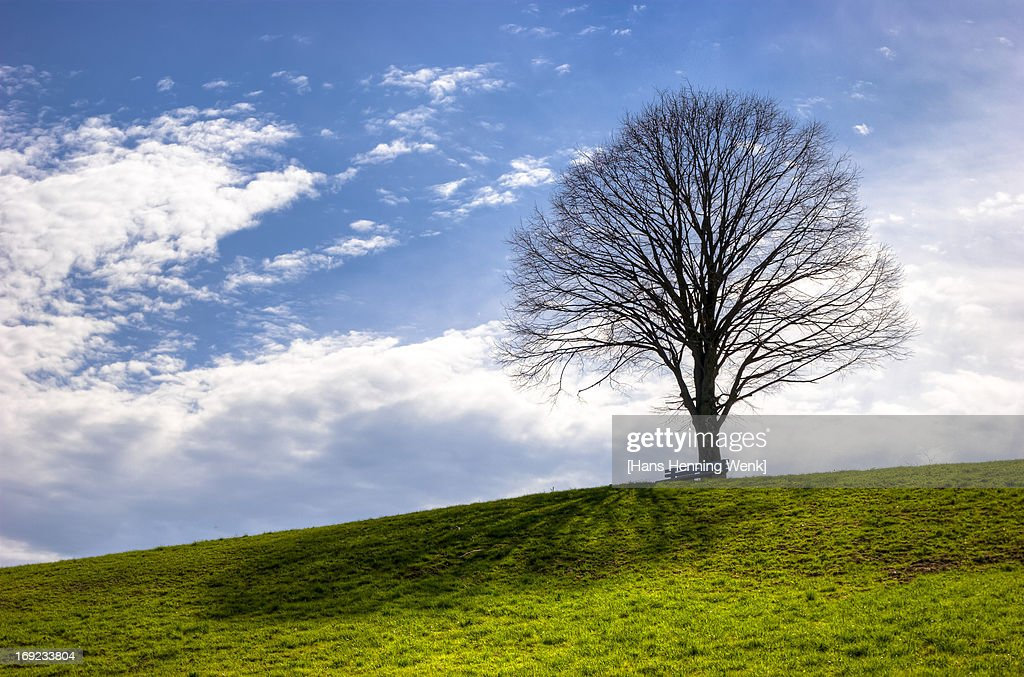Solitaire Tree on a Green Hill : Stock Photo