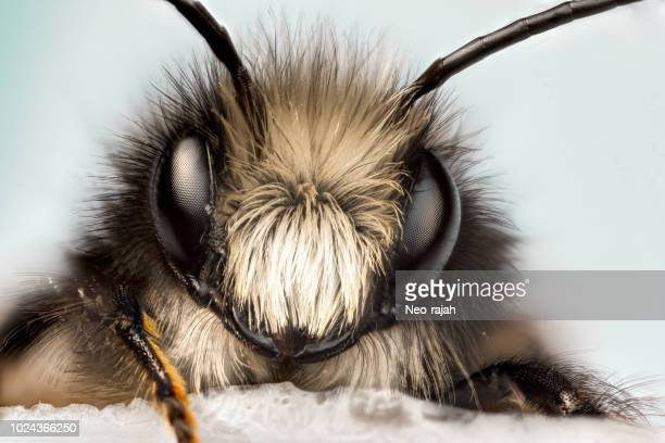 solitary bee - animal body part stock pictures, royalty-free photos & images