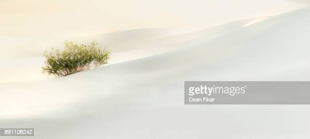 Solitary Bush in the Sand Dunes