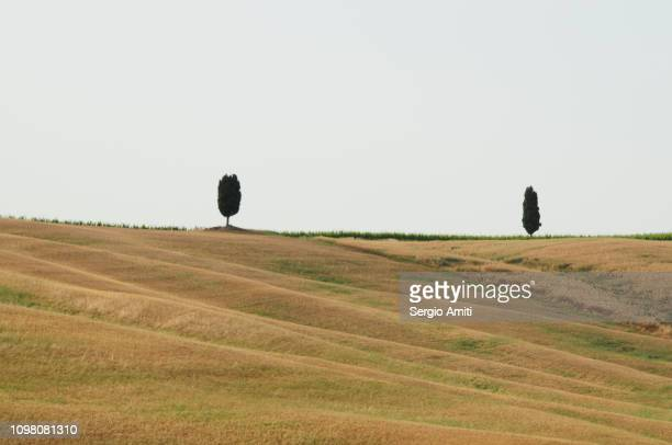 Solitary cypress trees on a Tuscan hill